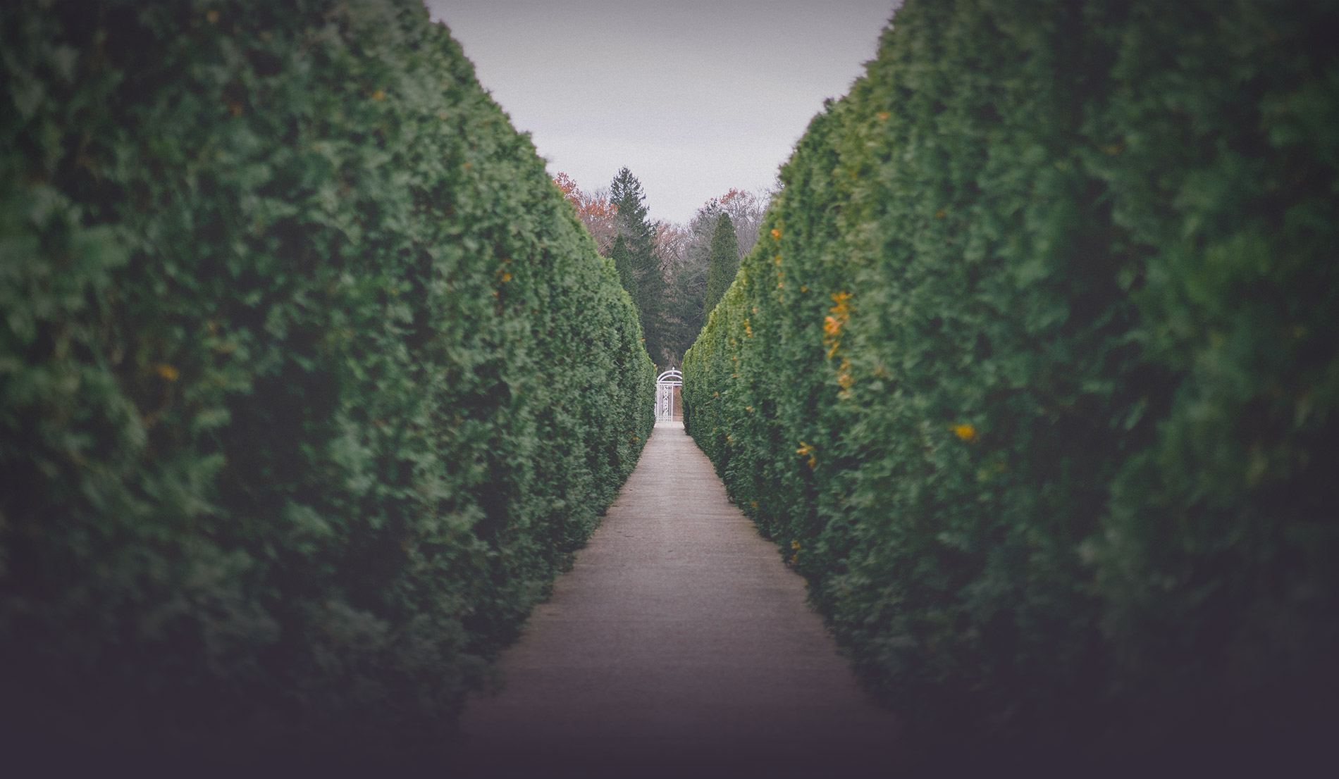 pathways-banner